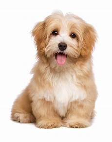 lille hund agria hundeforsikring find en billig forsikring til din