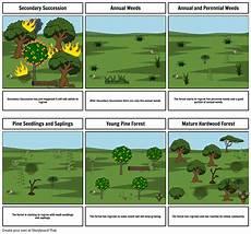 Secondary Succession Secondary Succession Woulfe Johnathan Storyboard