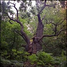 Malvorlagen Urwald Europa Urwald Eiche Foto Bild Deutschland Europe