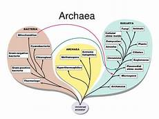 Archaea Examples 101 Proofs For God 95 Archaea