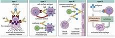 Hypersensitivity Reaction Hypersensitivity And Types Of Hypersensitivity Reaction