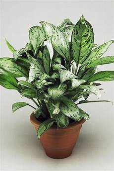 Low Light Apartment Plants 25 Best Indoor Plants For Apartments Low Maintenance