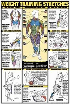 Weight Lifting Exercise Chart Weight Training Stretches Poster Laminated Fitness Charts