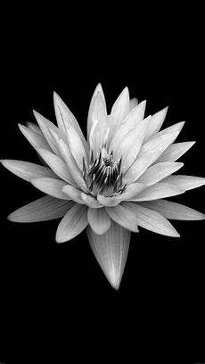 Iphone Wallpaper Black With Flower by Flower Black Xperia Z Background Iphone 8