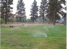Sprinkler Services (Repair, Install, Blowout, Startup)