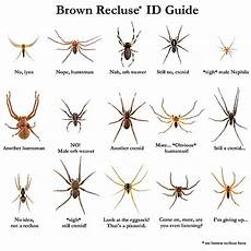Oklahoma Spiders Identification Chart Quot Brown Recluse Id Guide Quot Poster By Arthrolove Redbubble