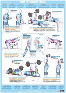 Weight Training Exercises Chart Arms Muscles Rear Weight Training Chart Chartex Ltd