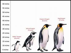 Types Of Penguins Chart Winter Animal Theme Child Care Lounge