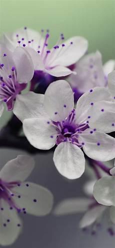 flower wallpaper for iphone xr white flowers purple pistil 1242x2688 iphone xs max