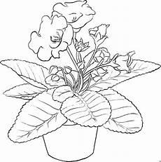 schoene topfblume ausmalbild malvorlage blumen
