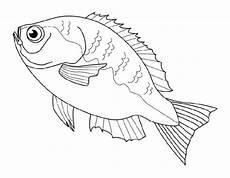 ausmalbilder zum drucken malvorlage fisch kostenlos 1