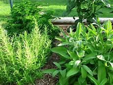 types of common garden herbs