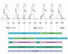 Gait Cycle Comprehensive Gait And Balance Analysis Apdm Wearable