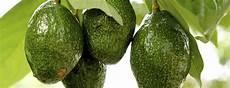 Different Types Of Avocado Types Of Avocados Berkeley Wellness