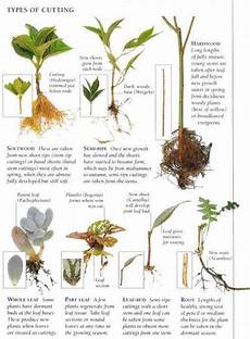 free plants from easy cuttings how to snip n stick h