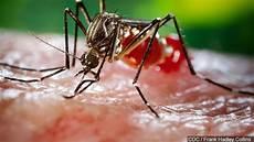 Eee Virus Mosquitoes Found With Eee Virus In Warwick Wjar