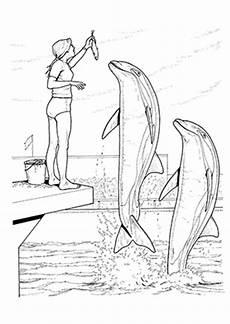 Delphin Malvorlagen Zum Ausdrucken Zum Ausdrucken Ausmalbilder Delphine In Einer Delphinshow Delphine
