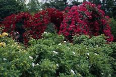Flower Wallpaper Garden by Flower Garden Flower Hd Wallpapers Images