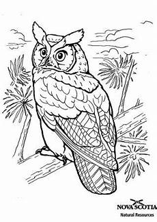 Vogel Malvorlagen Terbaik V 246 Gel Ausmalbilder Mit Bildern Ausmalbilder Eulen