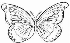 Malvorlagen Schmetterlinge Schmetterlinge Zum Ausdrucken Gratis Das Beste 24