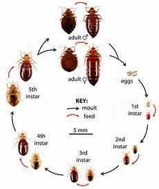 bed bug montgomery al extermitech