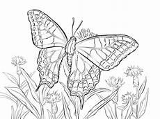 Malvorlage Schmetterling Erwachsene Ausmalbilder Schmetterling Zum Ausdrucken Kostenlos F 252 R