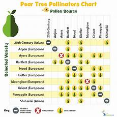 Apple Tree Pollination Chart Pollination Charts For Fruit Bearing Trees And Shrubs My