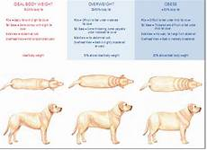 Golden Retriever Average Weight Chart Obese Pets No Dog About It Blog