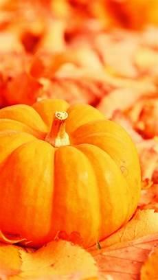 pumpkin iphone wallpaper fall pumpkin wallpaper and screensavers 63 images
