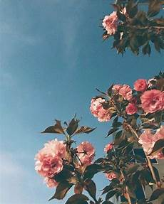 flower aesthetic wallpaper iphone pin by sweet on cameras wallpapers in 2018