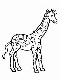 realistic giraffe coloring pages at getcolorings