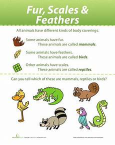 Animal Chart For Kindergarten Animal Coverings Animal Coverings Animal Worksheets