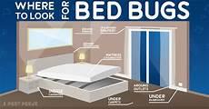 say bye bye anti bed bug best safe eco heavy duty spray