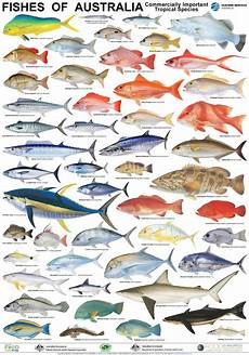 Reef Fish Identification Chart Australian Fish Poster With Images Fish Chart Sea
