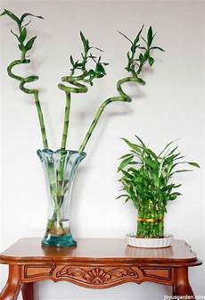 Low Light Stem Plants Top 10 Indoor Flowers That Thrive In Low Light Top Inspired