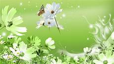 desktop green flower wallpaper flowers green hd desktop wallpaper widescreen