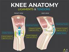 Right Knee Anatomy Behind Knee Why It Hurts In Back Of Or Under Your
