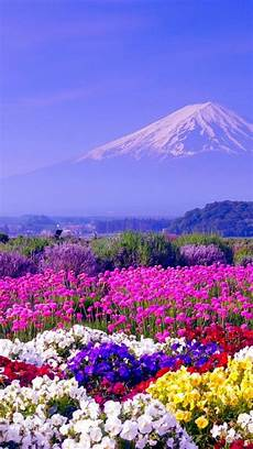 china flower iphone wallpaper iphone x wallpaper iphonewallpapers mount fuji