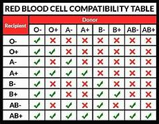 Red Shark Compatibility Chart Red Blood Cell Compatibility Table Red Blood Cell