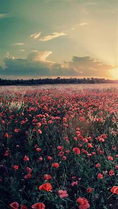flower meadow iphone wallpaper flowers farms sunset iphone wallpaper in 2019