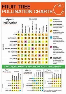 Apple Tree Pollination Chart Fruit Tree Pollination Flower Power