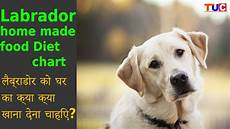 Labrador Puppy Food Chart India Labrador Homemade Food Diet Chart Dog Tips Tuc Youtube