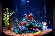 Saltwater Fish Tank Lights Lighting For A Saltwater Aquarium