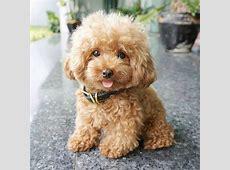 Fluffy Puppy   LuvBat