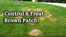 Brown Patch Grass How To Control And Treat Brown Patch L Expert Lawn Care