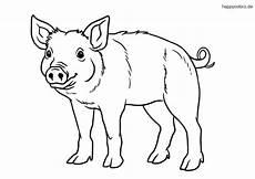 Schwein Malvorlagen Bilder 35 Schweine Zum Ausmalen Besten Bilder Ausmalbilder