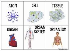 Levels Of Organization Levels Of Organization Card Sort Activity By Science