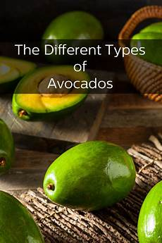 Different Types Of Avocado The Many Different Kinds Of Avocados