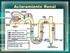 Image result for acollaramien6o