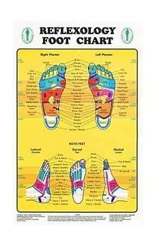 Norman Reflexology Foot Chart Reflexology Foot Chart Reflexology Zones Marked 1